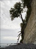 Fuß des Königsstuhls (Rügen)