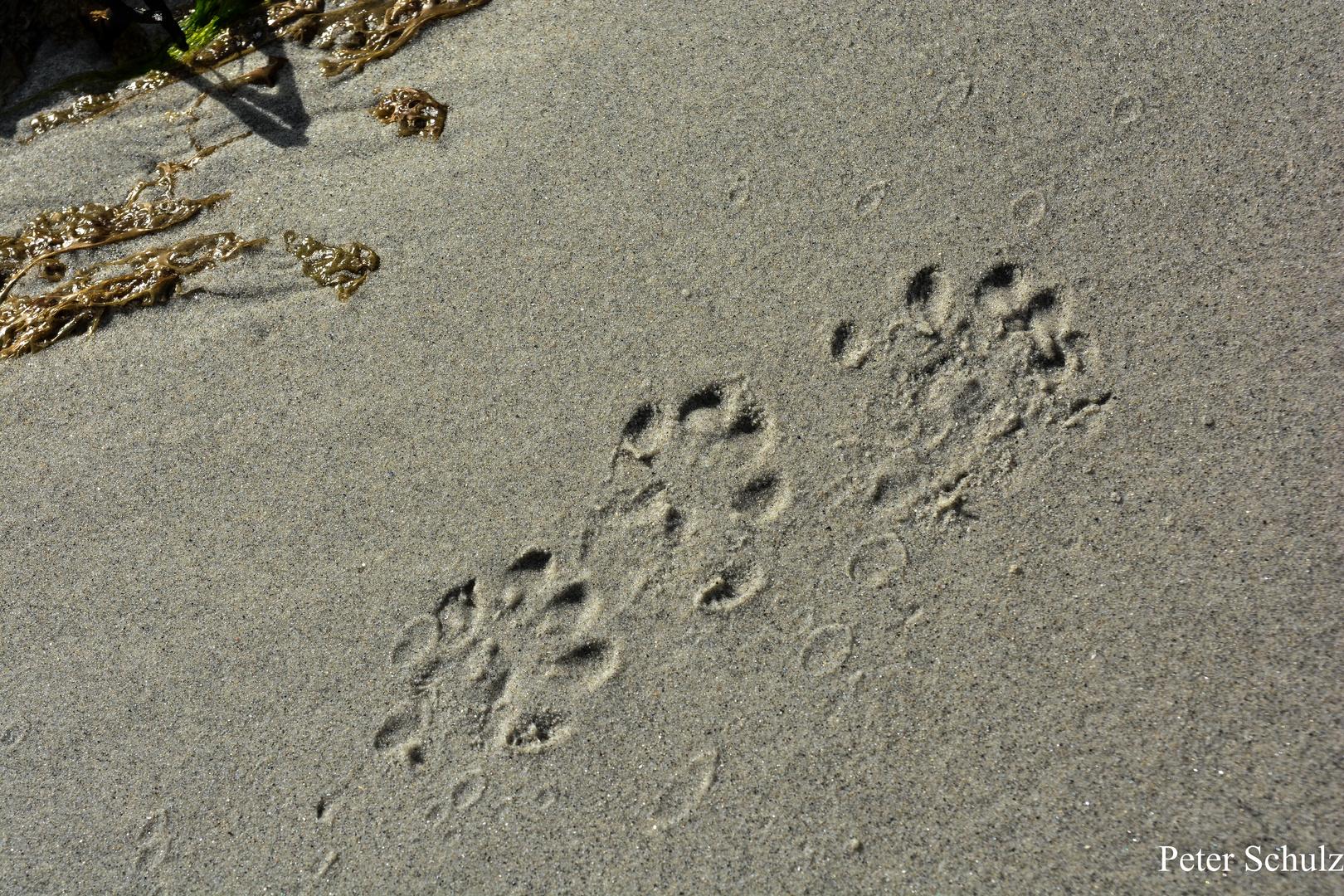 Fußspuren.