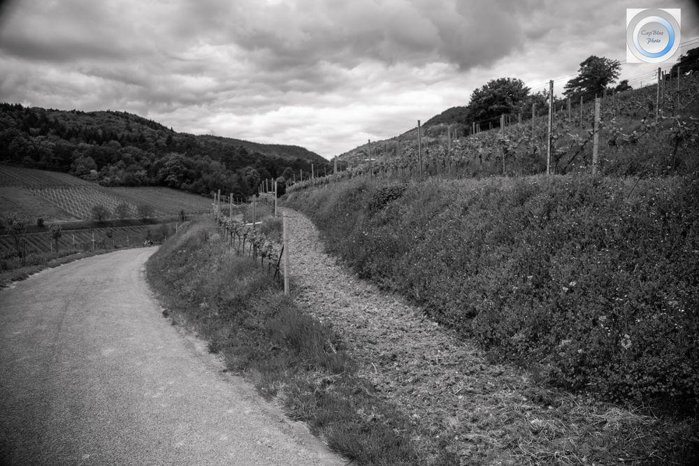 Fußweg zum Wingert in der Lage Kastanienbusch