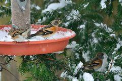 Futter im Schnee.