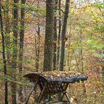 Futterplatz im Herbstwald