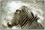 Fynny Stripes