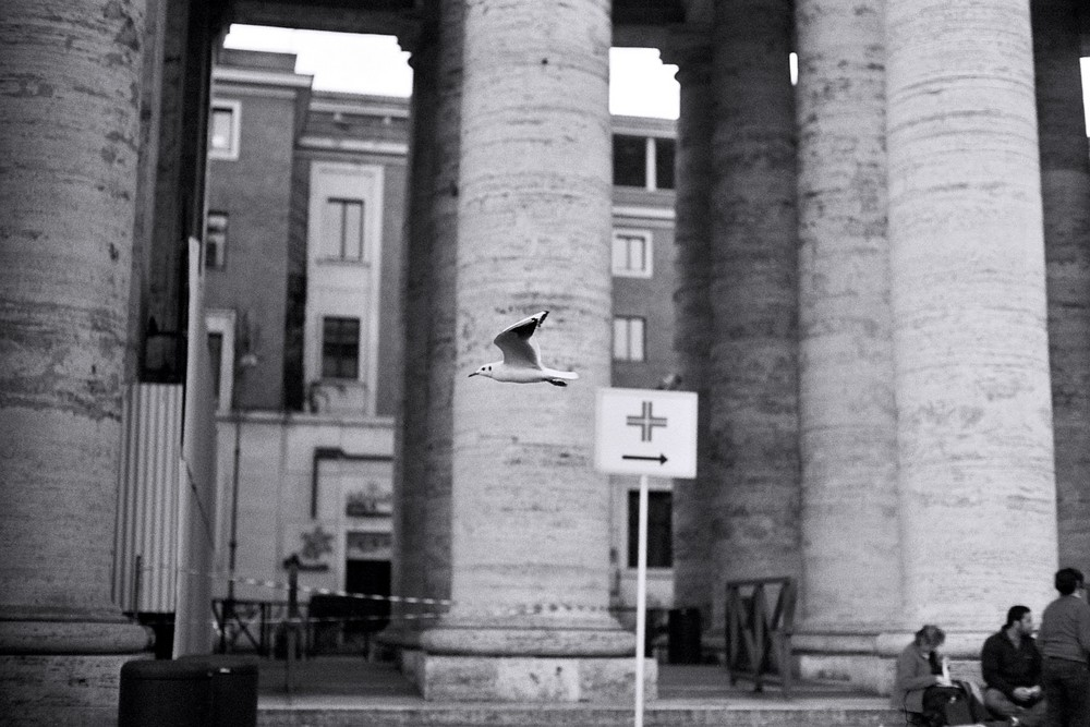 Gabbiano a San Pietro