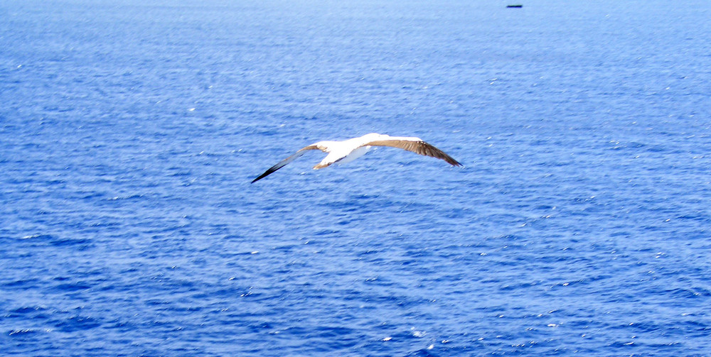 Risultati immagini per gabbiano sul mare