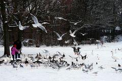 Gänse, Enten, Schwäne, Möven, Tauben ......... ob die alle satt werden?