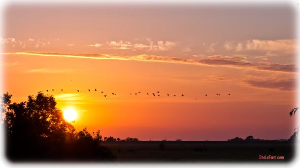 Gänse im Sonnenuntergang