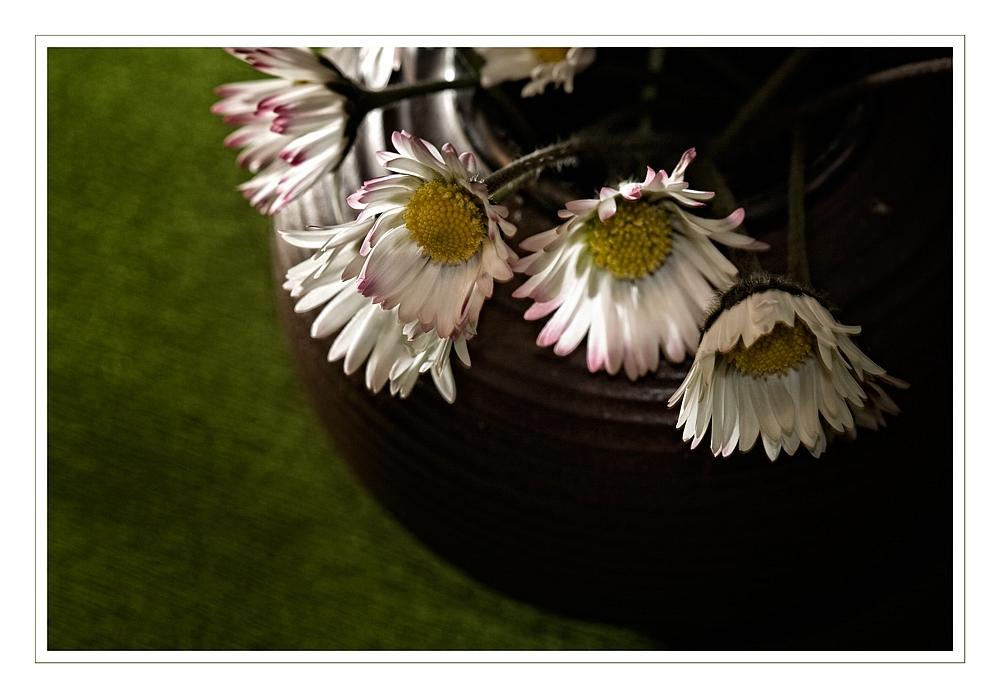 Gänseblümchen II