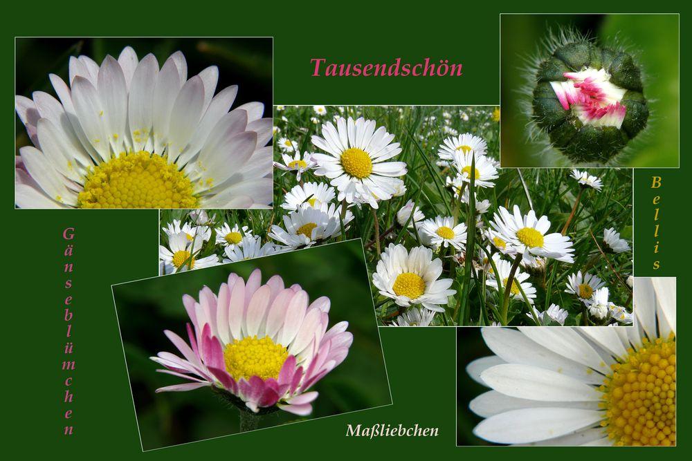 Gänseblümchencollage