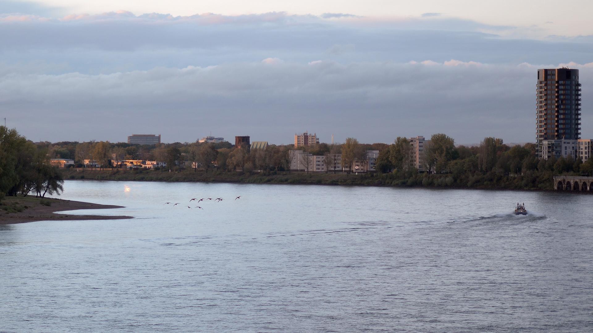 Gänses sind fliegen vor dem Mühlheimer Brücke.