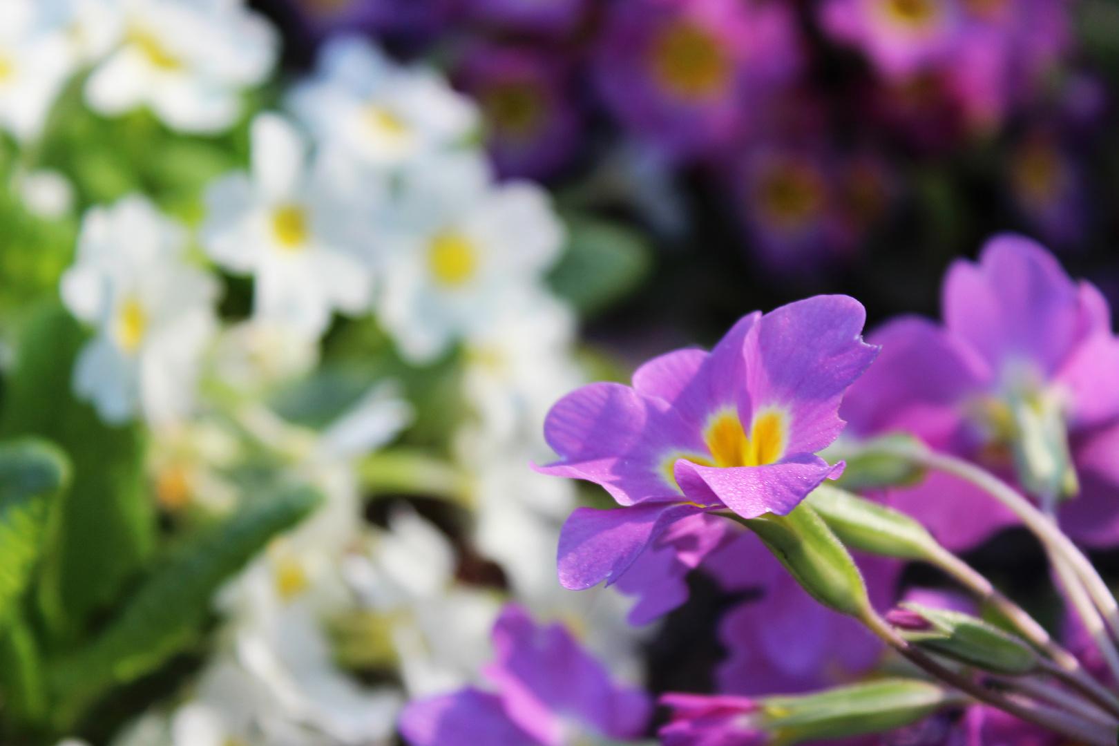 Gärten der Welt - Blütenpracht