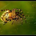 ...Gaffe les mouches..!!!