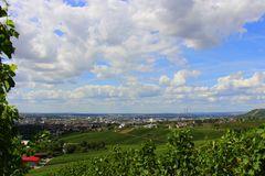 Gaffenber, Weinberge um Heilbronn