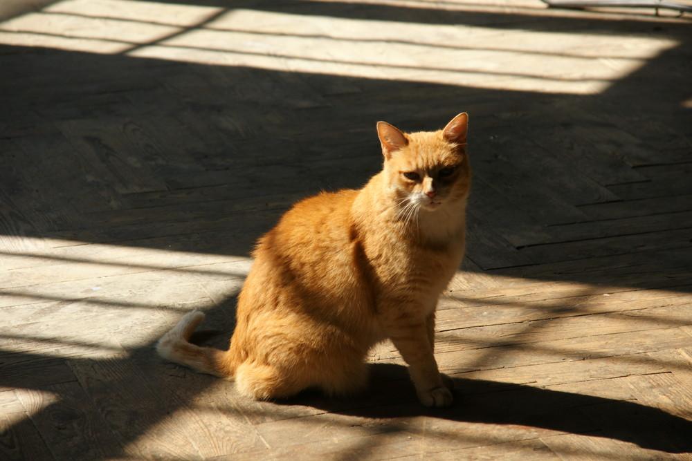 galaf cat