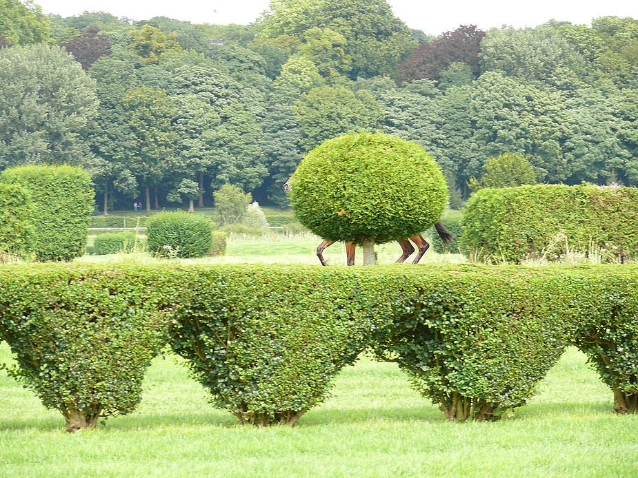 Galopp-Baum