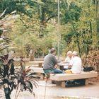 Gambling at the park