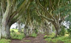 game of thrones....dark hedges