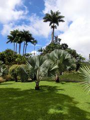 gamme de palmiers