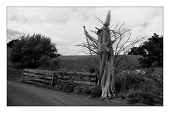 Gandalf - Northland Neuseeland