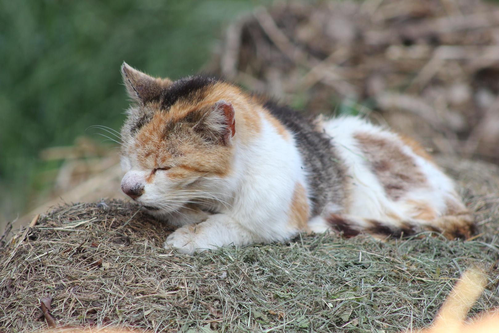 Ganz alte Katze