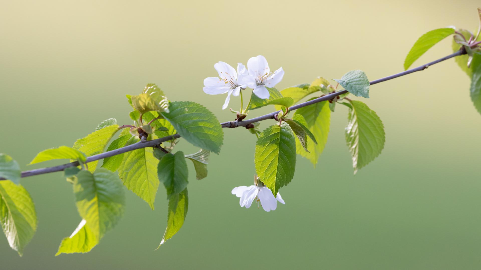 Ganz einfach  - Frühling