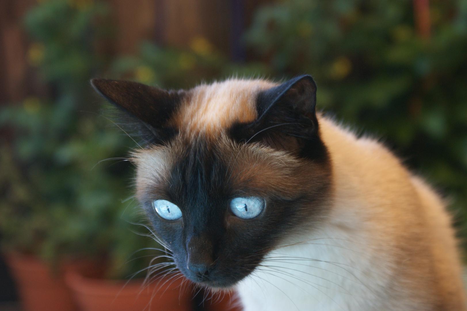 Ganz große blaue Augen