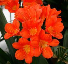 Ganz in Orange