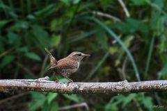 Ganz kleine Vögel