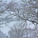 ganz leise,......  weiße Winterwelt  Eichenhain