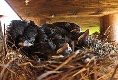Ganz schön eng in ihrem Nest ...