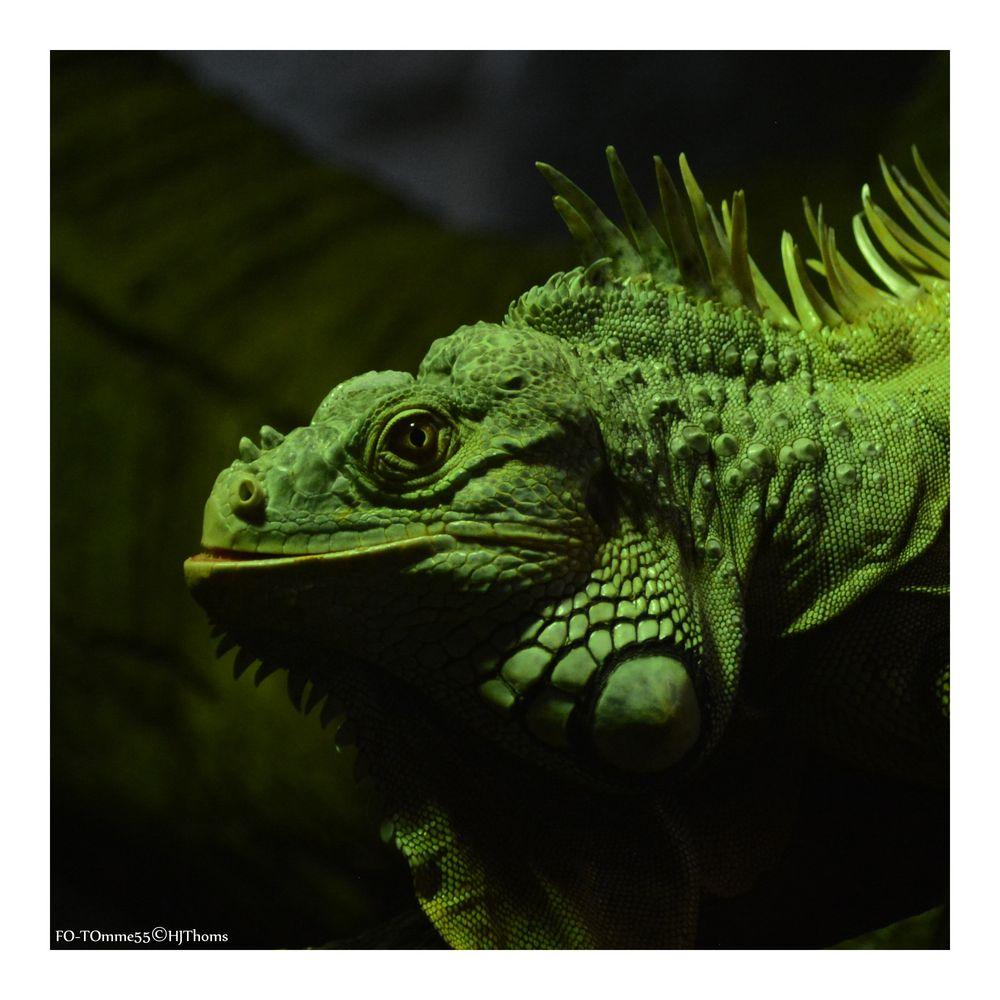 Ganz schön grün hinter den Ohren