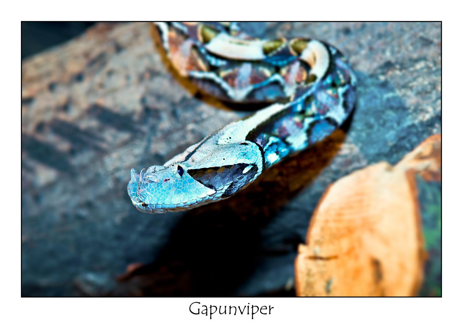 Gapunviper