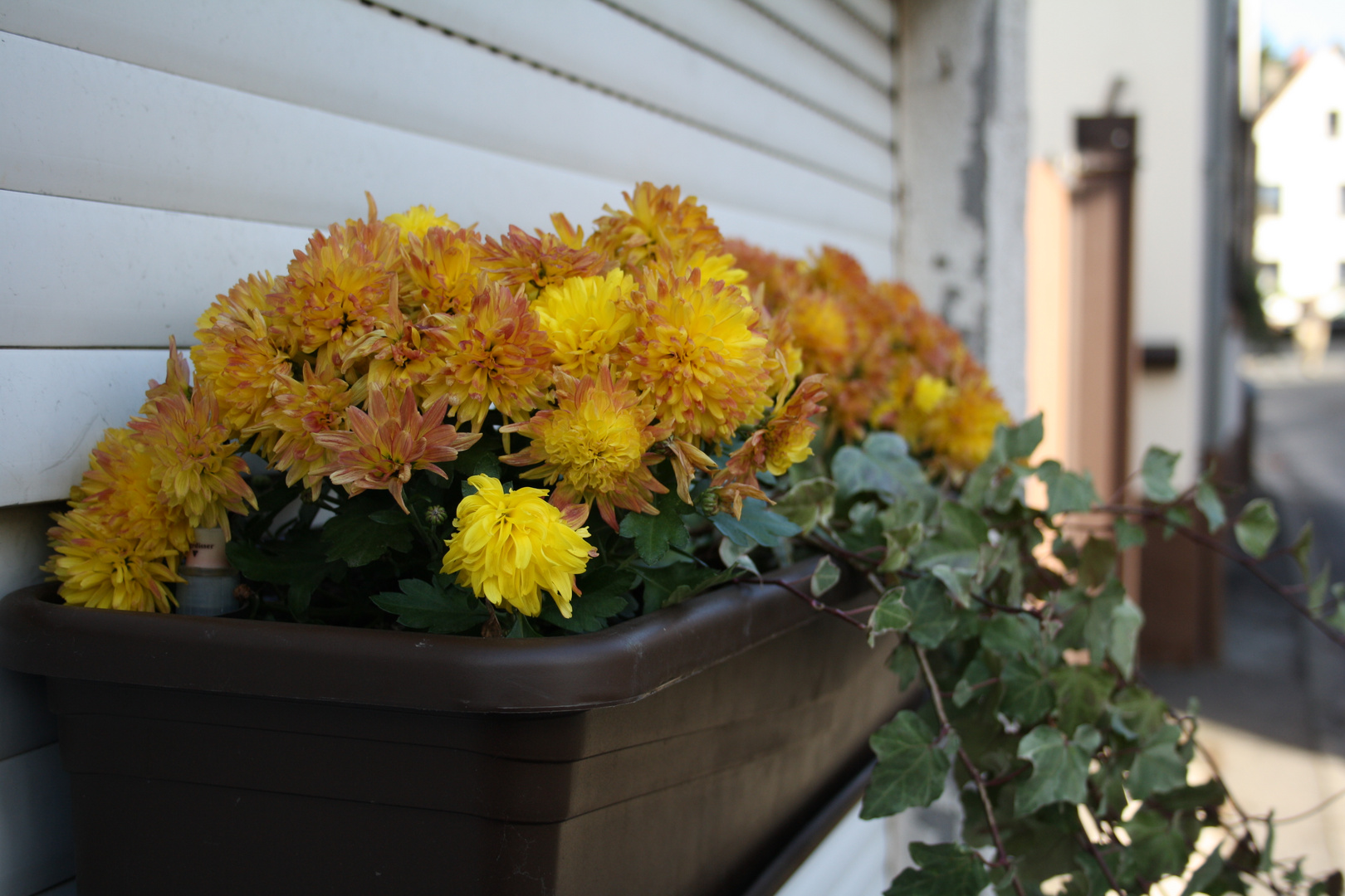 Garagentorpflanzen