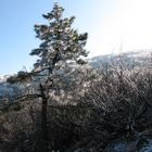 Garaverna sul Monte Colma(AL/GE)