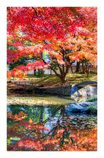 Garden dyed to autumnal tints