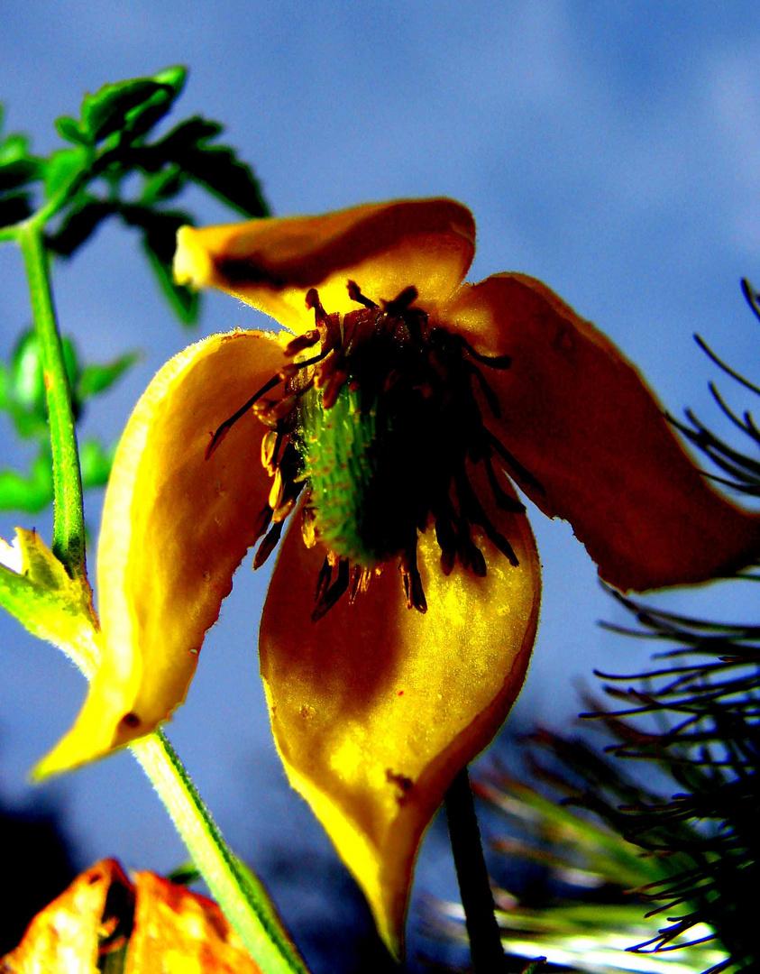 Garden flower.....