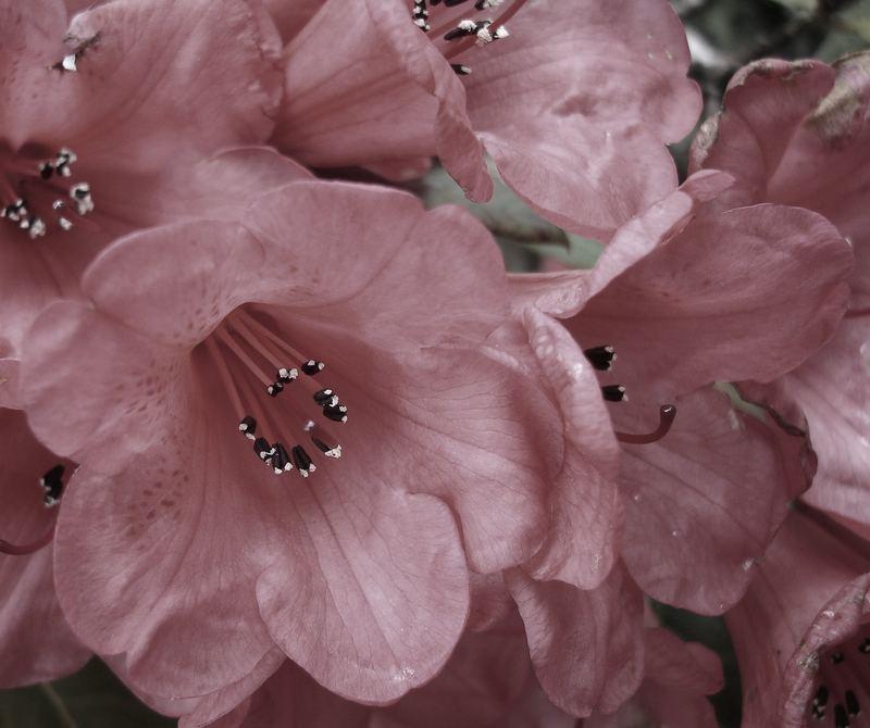 Garden Flowers!