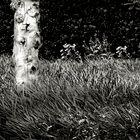 Garden Scene Detail