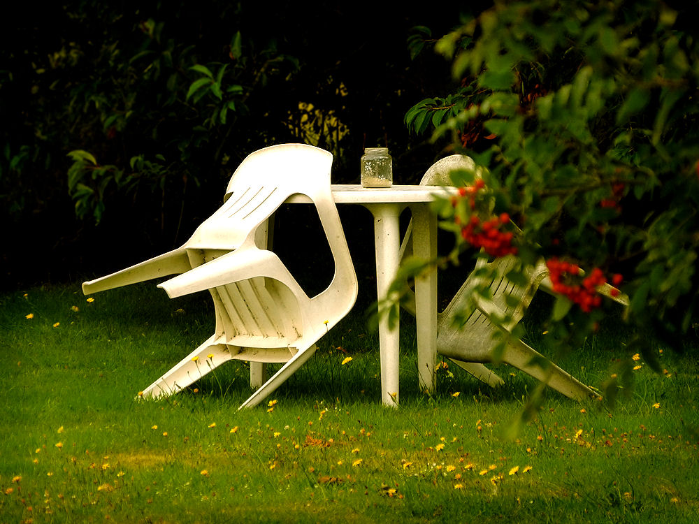 Garden scene in mid-August