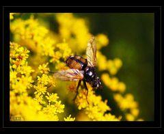 - garden sights -