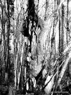 gardien de la forêt 1