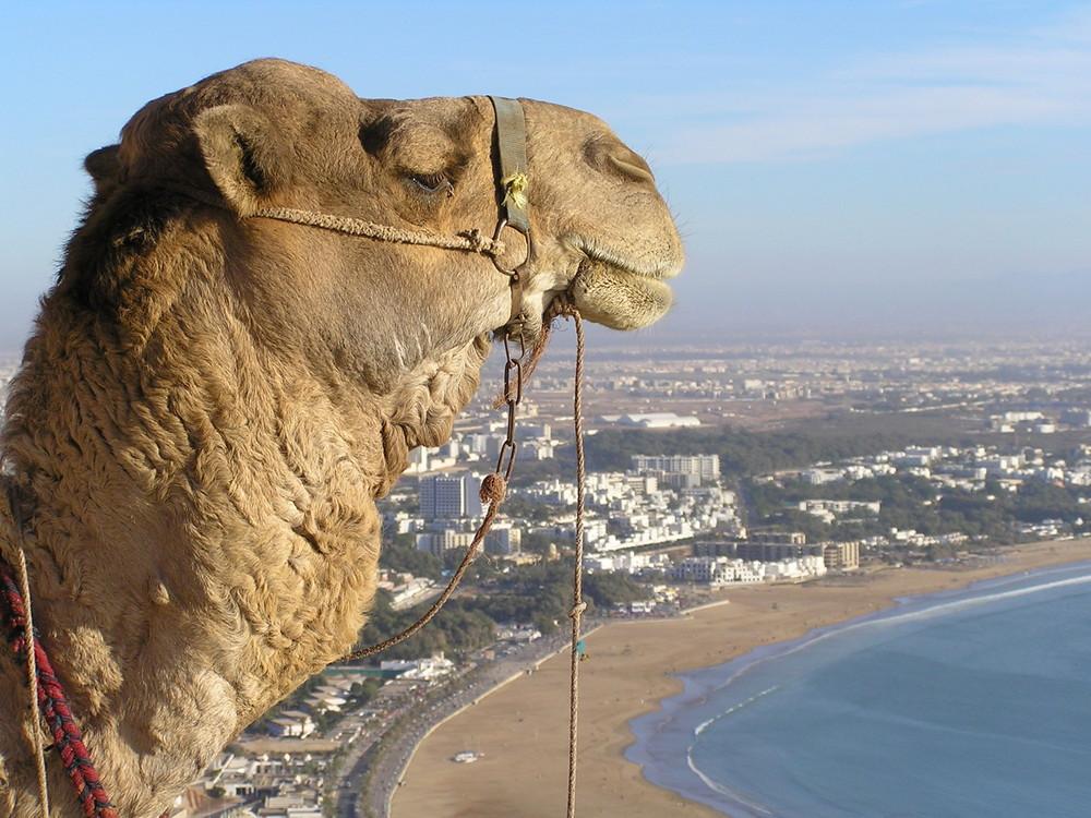 Gardien de la plage d'Agadir