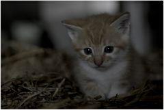 Garfield (2)