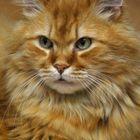 Garfield I
