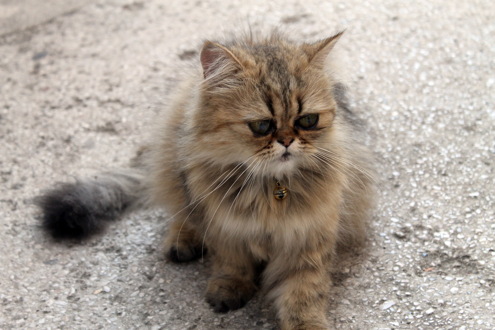 """Garfield"" iz Vrbnika"