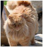 Garfield lässt Grüssen