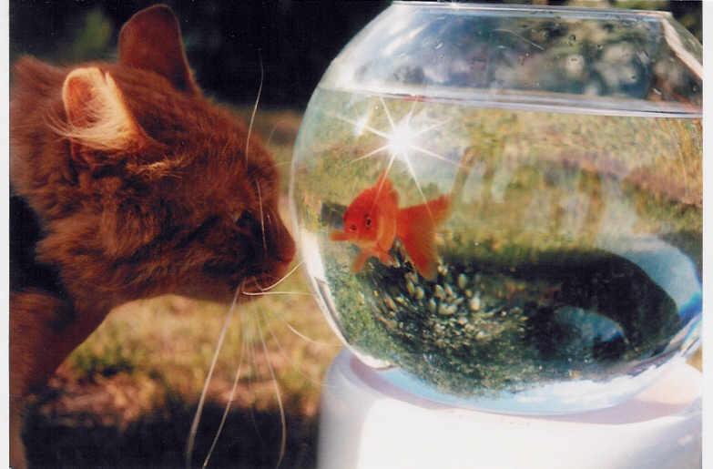 Garfields Fish
