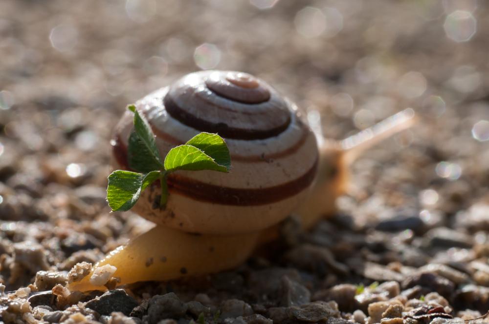 Garten Bänderschnecke Disselmersch Foto Bild Tiere Wildlife