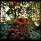 Garten Beauty #2
