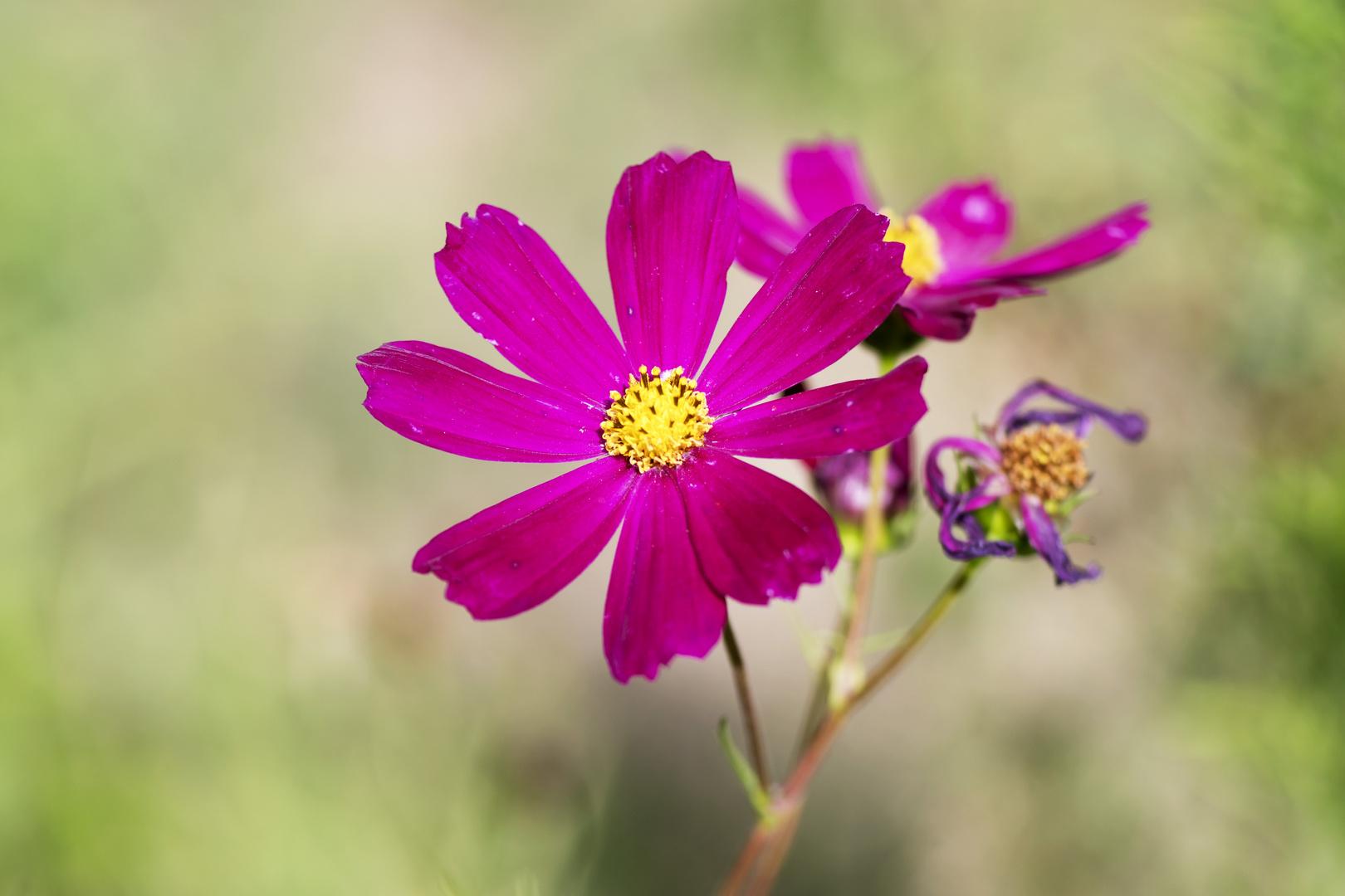Garten Blume Foto Bild Pflanzen Pilze Flechten Blüten