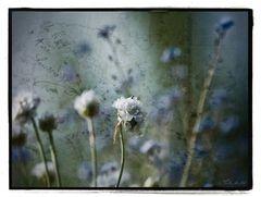 Garten der Liebe